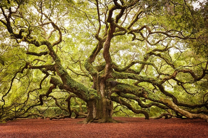 151105-r3l8t8d-880-amazing-trees-22